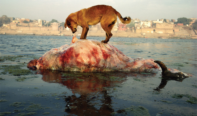 The Slow Murder of Mother Ganga