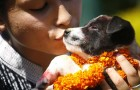 Dogs in Hinduism