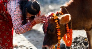 No Beef Eating in Hinduism : Time to end the mischief