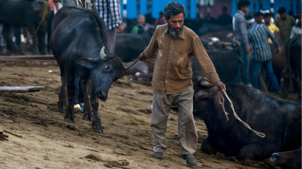 BJP got Rs 2.50 crore in donations from firms exporting buffalo meat