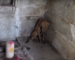 HHR Video : Prayers answered for injured puppy waiting for help in Hindu Temple