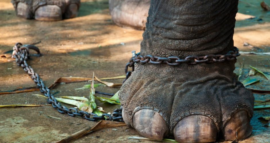 No more elephants at Pazhavangadi Temple