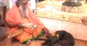 India : Jhansi temple where a 'bhakt' dog gets VIP treatment