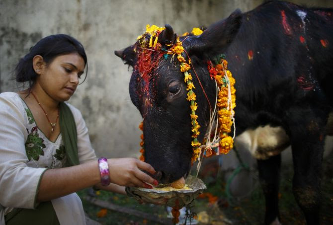 Now Gau rakshaks to tell their version of cow slaughter