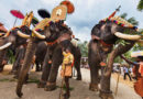 Temple Elephants of Kerala : What is Brewing?
