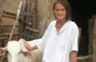Meet this German gaurakshak, who houses hundreds of sick, abandoned cows